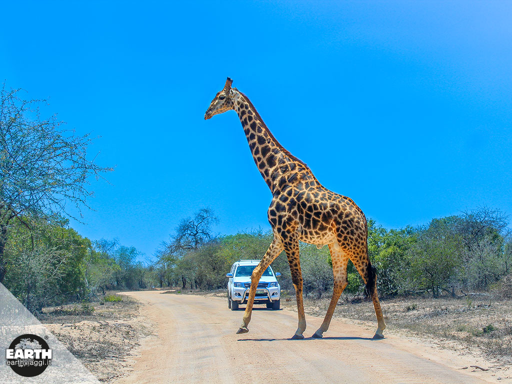 Alla scoperta del Parco Kruger in Sudafrica